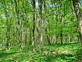 Forest - panoramio - paulnasca (119).jpg