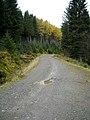 Forest Track Near Loch Chon - geograph.org.uk - 1035214.jpg