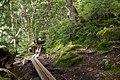 Forest in Yatsugatake 44.jpg