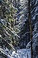 Forest on top of Kukkovuori - panoramio.jpg
