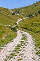 Forest road between Ćunina glava and Dnić, Risnjak National Park, Croatia 03.jpg