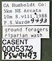 Formica pacifica casent0005372 label 1.jpg