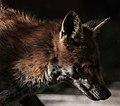 Fox (24485212838).jpg