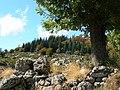France Lozère Parc national des Cévennes Les Urfruits 09.jpg