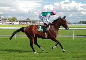 Frankel (horse) - Frankel goes to the post for the Juddmonte International at York, 2012