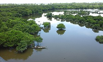 Wetland - Freshwater swamp forest in Bangladesh
