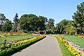 Garden - Agri-Horticultural Society of India - Alipore - Kolkata 2013-02-10 4812.JPG