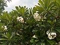 Garden Wat Phol Phao - panoramio (1).jpg