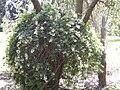 Gardenology-IMG 5017 hunt10mar.jpg