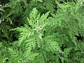 Gardenology.org-IMG 2771 rbgs11jan.jpg
