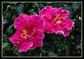 Gardens by the Marina Bay-44 (8331683899).jpg