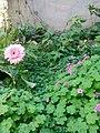 Gardens in Baghdad 39.jpg