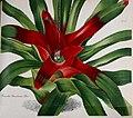 Gartenflora (Taf. 211) (7535936656).jpg