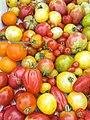 GeLa-Tomaten-Sommer.jpg