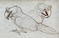 Gelderland1601-1603 Lophopsittacus mauritianus.jpg