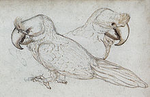 Sketch of two broad-billed parrots