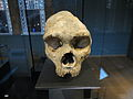 Gibraltar Skull (1).JPG
