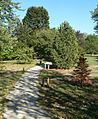 Gilman Park (Pierce, Nebraska) arboretum 1.JPG