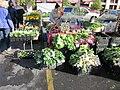 Girod Farmers Market Greens.JPG