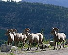 Glacier National Park13.jpg