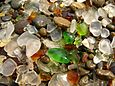 "Nahaufnahme vom Strand ""Glass Beach"" in Fort Bragg"