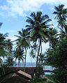 Goa - Scenes (14).JPG