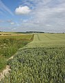 Goodmanham Wold Wheat - geograph.org.uk - 1390367.jpg