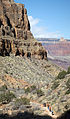 Grand Canyon National Park, Winter hikers on Bright Angel Trail 2758 - Flickr - Grand Canyon NPS.jpg