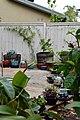 Grand Garden Lineup (15894157018).jpg