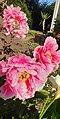 Grandes fleurs de pivoine.jpg