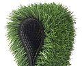 Grasss 1.jpg