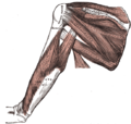 ...impingement, bursitis, and strains.  The ends of the rotator cuff...