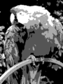 Grayscale 2bit palette sample image.png