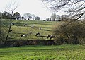 Grazing near Gospel End, Staffordshire - geograph.org.uk - 616388.jpg