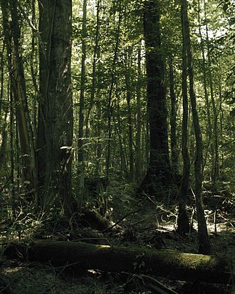 Great Dismal Swamp - Forested wetland within the Great Dismal Swamp