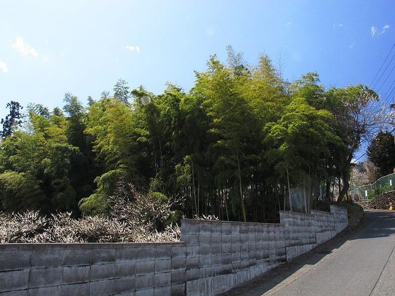 File:Green - panoramio (20).jpg