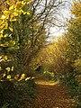 Green Lane below Windmill Hill - geograph.org.uk - 1050386.jpg