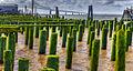 Green Pilings (4560895027).jpg