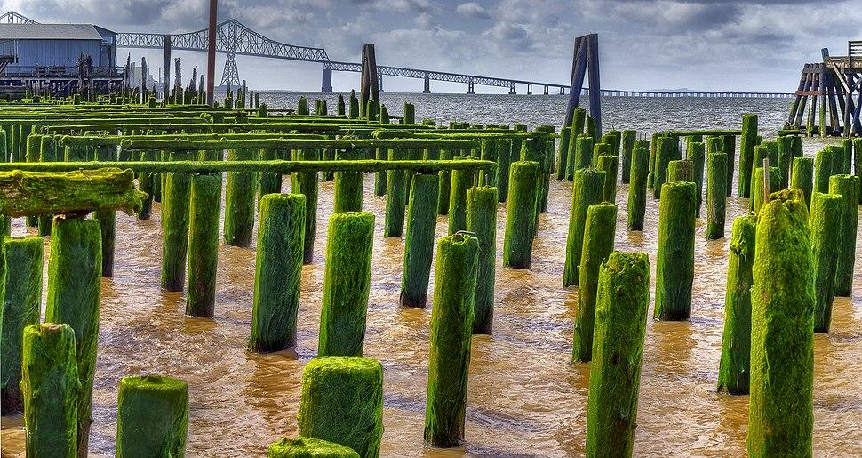 Green Pilings (4560895027)