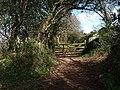 Green lane near Halwell - geograph.org.uk - 1242606.jpg