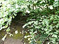 Grimbergen Kloosterdam Hakhout van Hazelaar langs Maalbeek 03 - 196174 - onroerenderfgoed.jpg