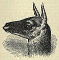 Guanaco EB1911 vol.12 p.649.jpg