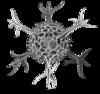 Haeckel Spumellaria detail.png