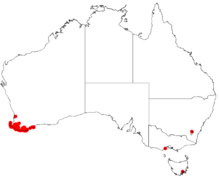 Hakea oleifolia Distribution Map.png