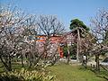 Hakusan Park Prunus mume3.JPG