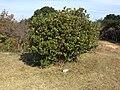 Hamajimacho Hazako, Shima, Mie Prefecture 517-0403, Japan - panoramio (12).jpg