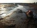 Harbour, Cockwood - geograph.org.uk - 772973.jpg
