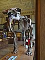 Hauerelefant Naturhistorisches Museum Wien.jpg