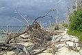Havelock Island, Elephant Beach, Andaman Islands.jpg