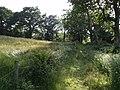 Hawkchurch Bridleway 14 - geograph.org.uk - 472220.jpg